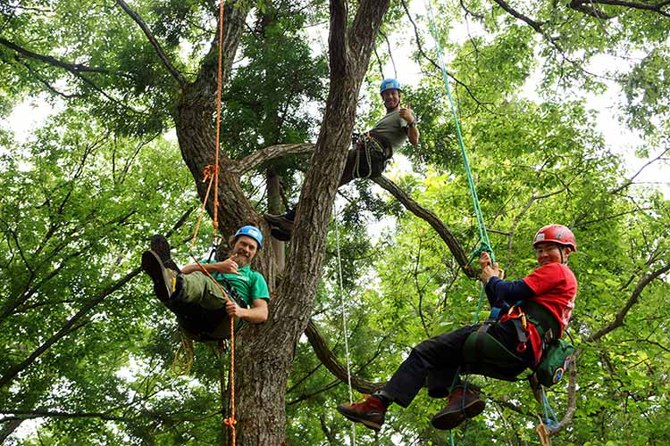 tree climbing in hakuba japan