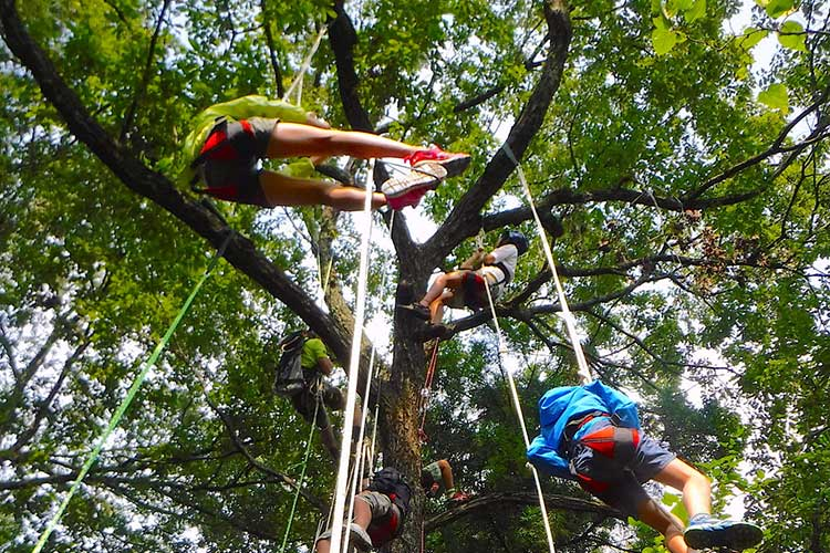 tree climbing in hakuba